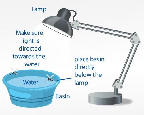 mosquito-light-trap