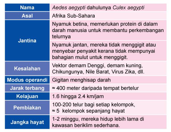 info-denggi